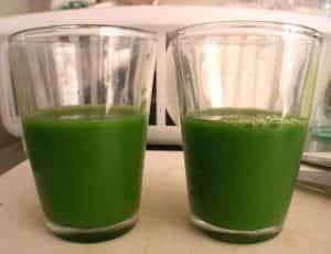 groene gerst drankje