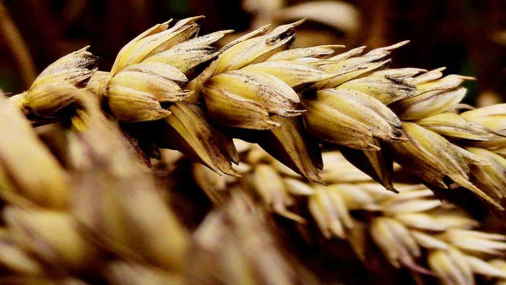 graanproducten