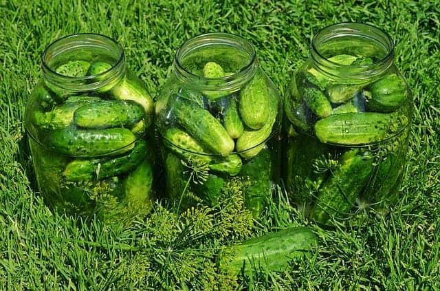 komkommers kuilvoer