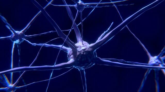 neuron, zenuwcel